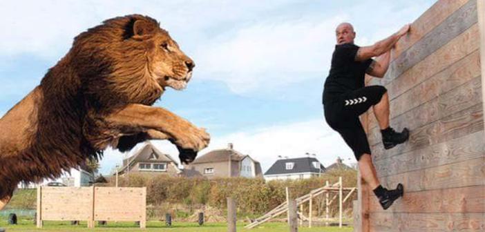 spirit of a lion run